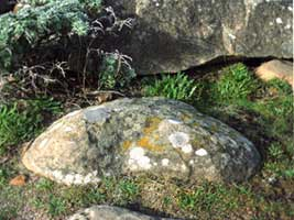 Rock and Moss